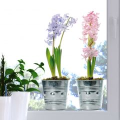 Fenstersticker Blumentöpfe